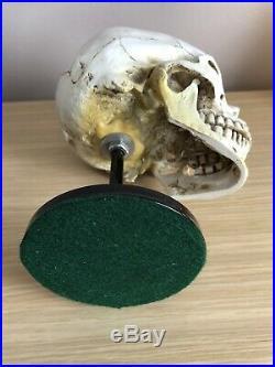 Skull Helmet Display Stand U. S German Ww2 Hats Vietnam Usmc Para Sas Raf Army